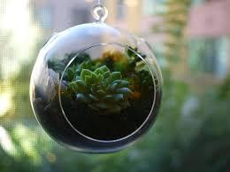 hanging air terrarium plant ideas