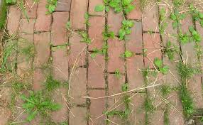 get rid of patio weeds without chemicals