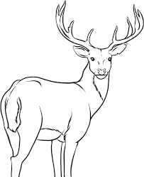 coloring pages draw a deer