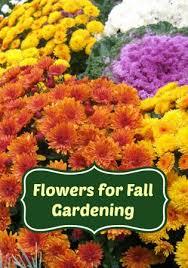 fall garden flowers. The Best Flowers For Fall Gardening Garden D