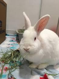 thỏ bị viêm mũi, chảy nước mũi