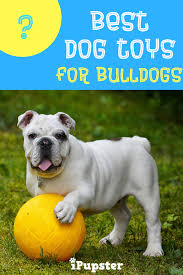 best toys for bulldogs toys to and the toys to avoid