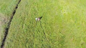 grass field aerial. Two Kids Holding Their Hands And Running On A Grass Field. Aerial Slow Motion Shoot Of Green Field In