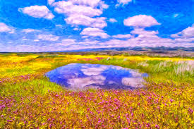 wildflowers painting wildflowers and pond near san luis obispo by dominic piperata