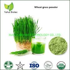 china fresh wheatgr juice powder for
