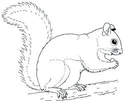 Squirrel Coloring Pages Pepiinoinfo