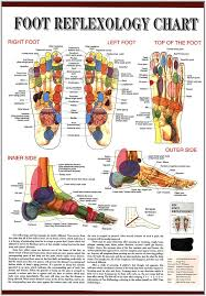 foot reflexology chart laminated science kits amazoncom
