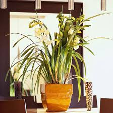 lighting for houseplants. Lighting For Houseplants Better Homes And Gardens