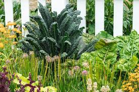9 vegetables that grow quickly