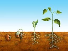 Image result for how plants grow