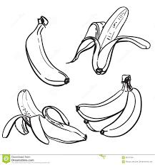 Banane Dessin Au Trait Des Bananes Sur Un Fond Blanc Une Couleur