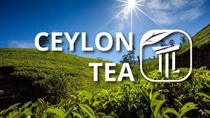Image result for ceylon tea estate images
