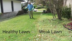 how to get rid of weeds in garden. Holistic Weed Control How To Get Rid Of Weeds In Garden