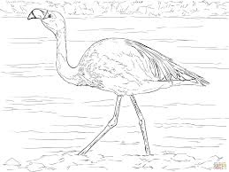 Bird Habitat Coloring Pages Save Bird Coloring Pages Free Printable