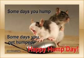 Funny Hump Day Quotes Gorgeous Images Of Funny Hump Day Quotes New Funny Wednesday Hump Day Quotes