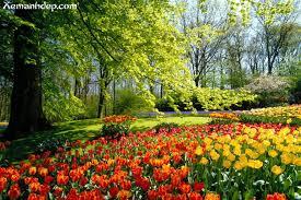 beatufiul flower gardens | Beautiful flower gardens photos-Garden picturess  | Xemanhdep Photos .