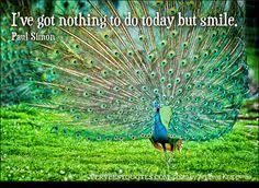 Peacock Beauty Quotes Best of Norman Polderdyk Normanpolderdyk On Pinterest