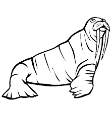 Small Picture Walrus coloring page Animals Town animals color sheet Walrus