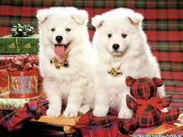 christmas puppies wallpaper. Unique Puppies Christmas Tree Puppy Wallpaper Images U0026 Pictures  Becuo Intended Puppies U