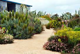 Small Picture Sustainable Landscape Requires Appropriate Plant Selection