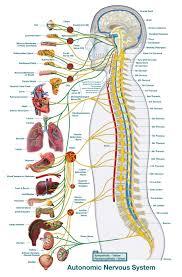 Chiropractic Body Chart What Is Chiropractic Thinc Chiropractic