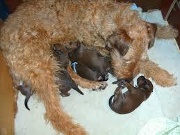 Tierhalterinfos f r Hunde