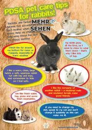 bunny care pet bunny