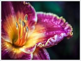 Types of <b>Lilies</b>: A Visual Guide - FTD.com
