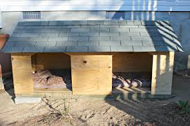 diy double dog house for large dogs