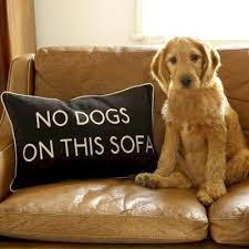 no dogs on this sofa pillow my s would say sure mom wver you say then jump up just try to stop em