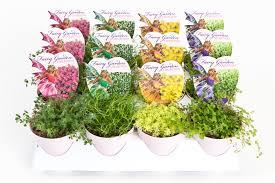 3 fairy garden whole bedding plants hybels inc