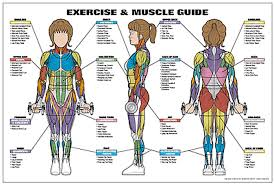 Body Fitness Chart Exercise And Muscle Guide Female Fitness Chart Co Ed