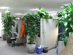 Office gardening Workplace Plants Office Garden Green Clean Air Indoor Gardening Inhabitat Lowmaintenance Plants For The Office