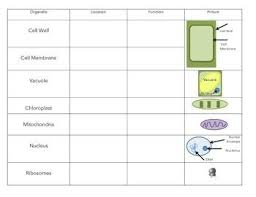 Cell Organelle Chart Cell Organelle Chart Science Teaching Biology Chart