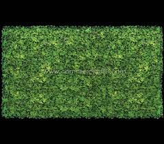 english ivy screen exterior