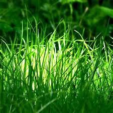 D Licieux Comment Refaire Son Jardin 9 Bien Arroser Faire Un Beau Gazon  Semer Gazon Evtod