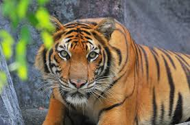 real jungle animals. Unique Jungle Animals  Causes Of Color And Real Jungle O