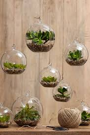perfect office plants. Perfect Office Plants A