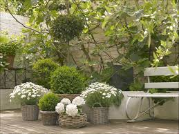 garden bench and basket potted plants
