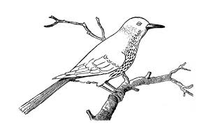 Small Picture Robin Bird on Dead Tree Branch Coloring Page Robin Bird on Dead