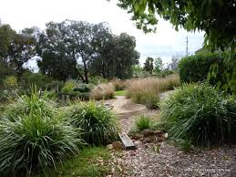 Small Picture Australian native grasses for landscaping Native Grasses For