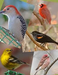 Identify Your Common Backyard Birds  YouTubeBackyard Bird Watch
