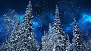 """""""Заснеженные <b>верхушки</b> деревьев на фоне ночного <b>звездного</b> ..."""
