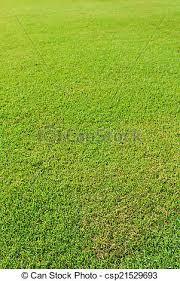 green grass soccer field csp21529693 green40 green