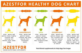 Dog Weight Chart Nutrition Life Expectancy Azestfor