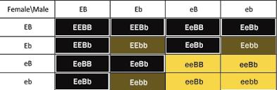 Labrador Color Chart Labrador Retrievers Complete Guide To Costs Care And
