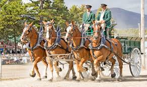 draft horse journal bill roleau driving for isham brook farms took top honors in the four abreast class