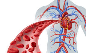Resultado de imagen para Generar nuevos vasos sanguíneos para paliar los efectos de la aterosclerosis
