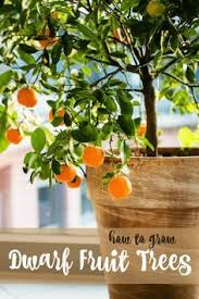 1274 Best Gardening Images On Pinterest  Plants Gardening And Indoor Fruit Trees Low Light