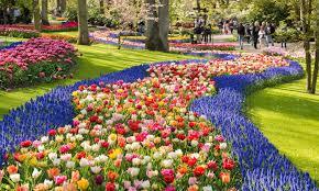 spring guide to tulips in keukenhof gardens 2019